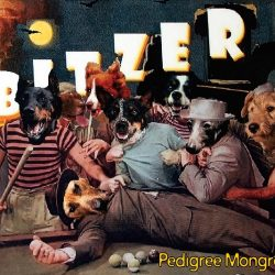 BITZER album release 'Pedigree Mongrel' out June 15